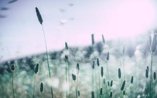 Wiosenna alergia - jak sobie z nią radzić?